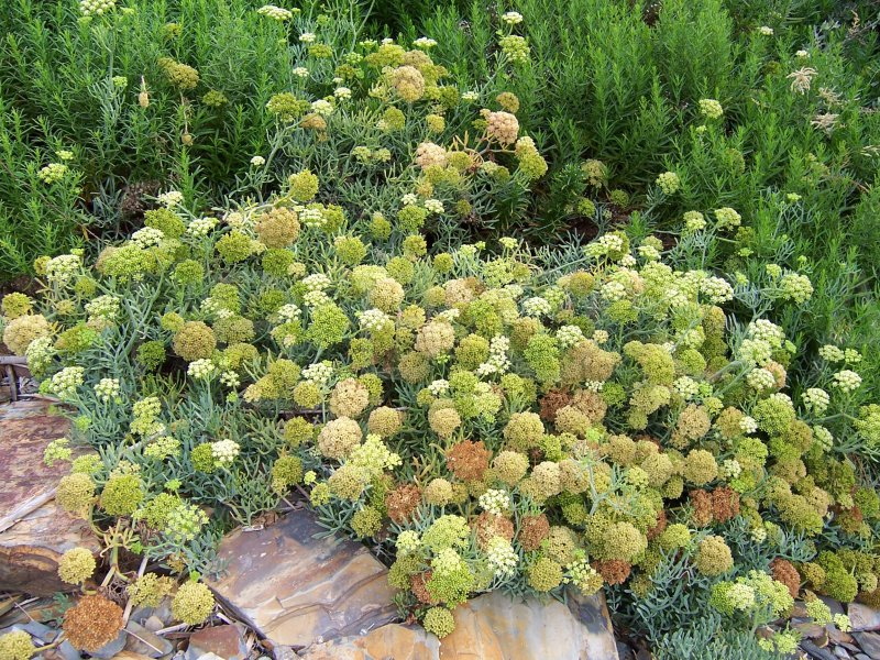 Oregon State University LANDSCAPE PLANTS Vol 2